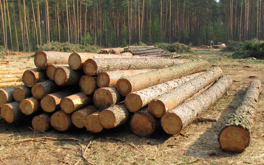 Продаем лес кругляк хвойных пород высокого качества, разной длины и диаметров.