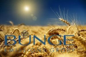 Закупаем Пшеницу3.5,6кл, Подсолнечник, Сою, Кукурузу
