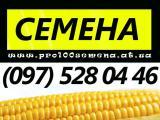 Семена, семенная кукуруза, гибриды, F1, посевной материал кукурузы от производителя