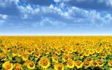 Гибриды подсолнечника, семена подсолнечника, гибриды кукурузы, семена кукурузы, СЗР, удобрения