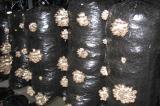 Готовые грибные блоки вешенка и шампиньон купить в Крыму