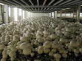 Сбор грибов в Польше