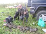Продаются щенки Русского охотничьего спаниеля