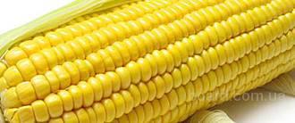 продам насіння соняшника, кукурудзи, буряку