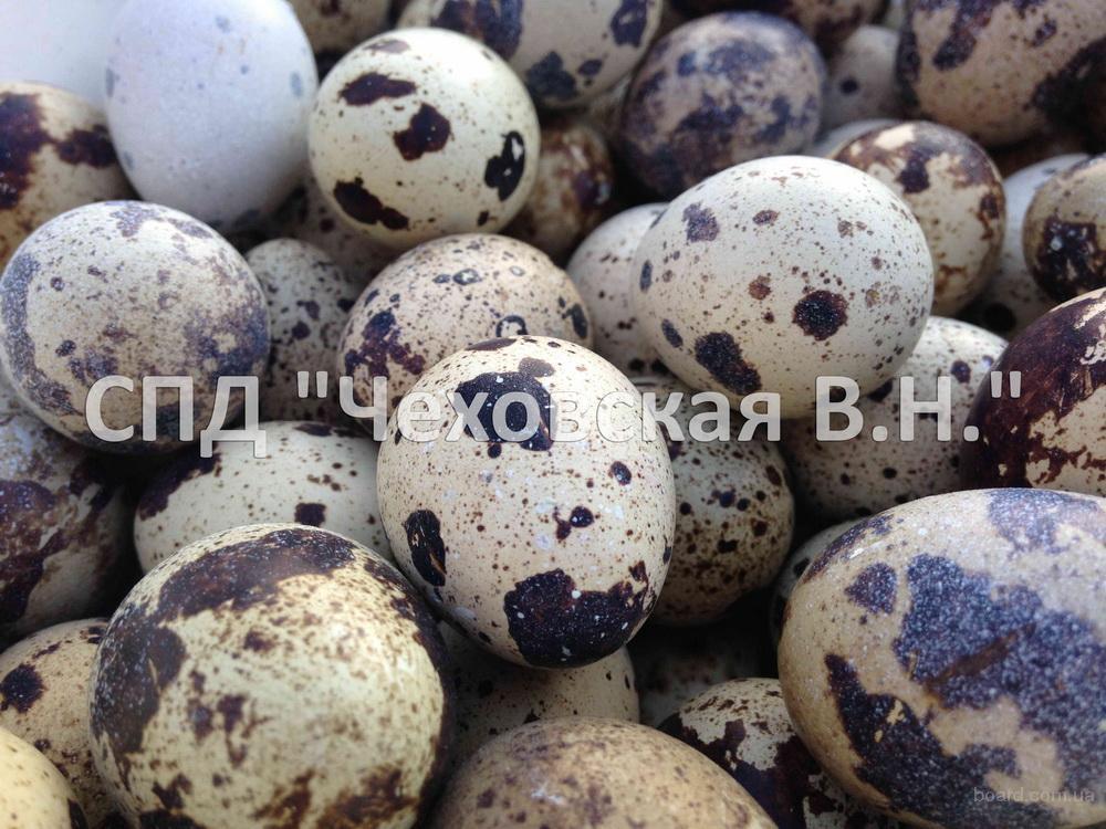 Продам яйца инкубационные (Белый Техасский)