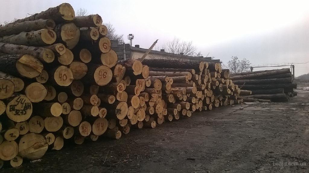 Погрузка леса в контейнера, документы, экспорт