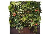 Вертикальное озеленение Greenwall «под ключ»