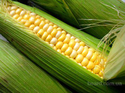 Сахарная кукуруза Трофи