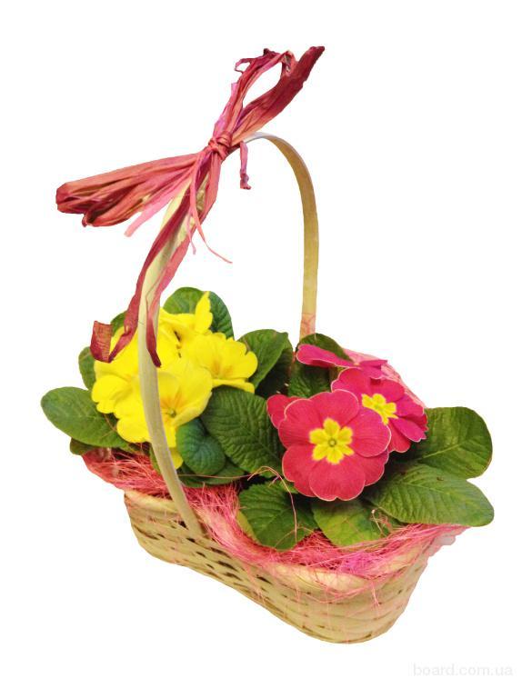 Подарки и цветы на 14 февраля, 8 марта, примула