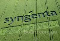 Семена (посевной материал) кукуруза, подсолнечник, ячмень Syngenta (Сингента). Недорого