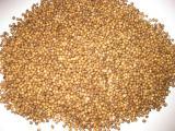 Кориандр, семена кориандра сорт Оксанит, кориандр Медун, кориандр Янтарь 1 репродукция, золотистый, светлый