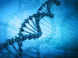 Тест на определение отцовства в ДНК лабораториях
