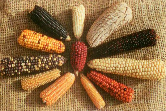 Отход кукурузы