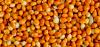 ЧП Основание. Днепропетровск. Закупаем круглый год: гречиху, горох, просо, овес (и голозерный), кукурузу, нут.