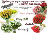 Продам тюльпаны оптом к 8 марта Крым 2015