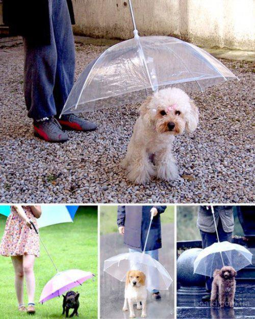 Зонты для собак
