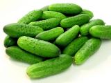 Семена огурцов – все сорта по лучшим ценам на сайте «Зернятко»