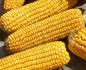 Продам семена кукурузы, семена подсолнечника, СЗР и удобрения ведущих отечественных и мировых производителей.