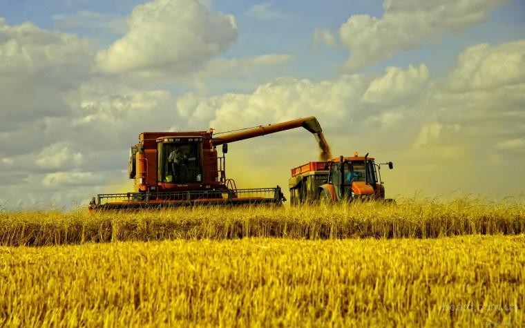 Услуги по уборке зерновых комбайнами в Херсонской области. Услуги уборки, комбайнов