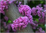 Купить саженцы, садовые растения оптом и в розницу
