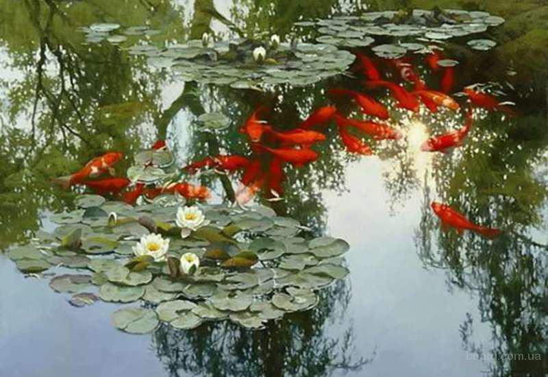 рыбки для пруда,купить оптом,карпы кои,японские рыбки,ферма кои,корм для карпов кои,аквариум,золотые рыбки,магазин кои,японские кои,карп,комета,пруд