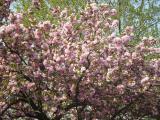 Экскурсии по Закарпатью на майские праздники