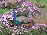 аскания нова на майские туры, аскания нова из киева на майские, экскурсии, отдых на азовском море недорого