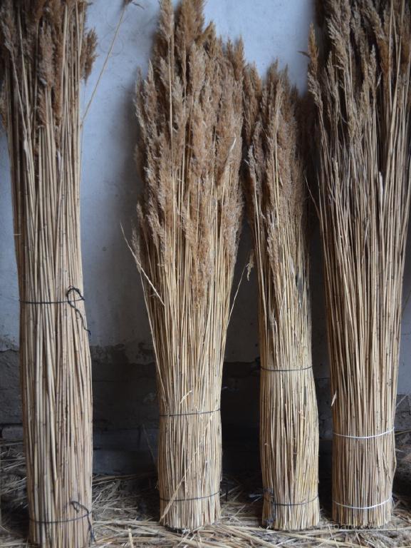 Связанный тростник