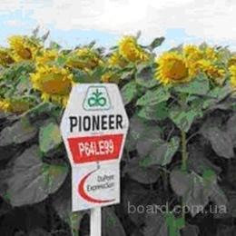 "Семена подсолнечника П64ЛЕ99, (Экспресс Сан) ""Pioneer"""
