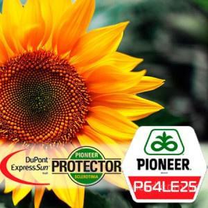 "Семена подсолнечника П64ЛЕ25, (Экспресс Сан) ""Pioneer"""