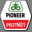 """Куруза ПР37Н01 (ФАО 390), """"Pioneer"""""""