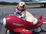Международные авиаперевозки животных