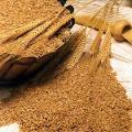 Купуємо пшеницю 2-го та 3-го класів