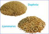"""Аквариумный интернет-магазин """"Арована"""". Гаммарус и Дафния - натуральные корма для рыбок!"""