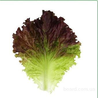 Семена салата KS 155 фирмы Китано