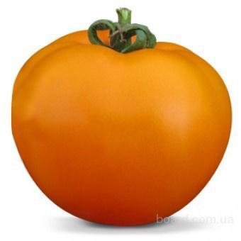 Семена оранжевого томата KS 18 F1 фирмы Китано