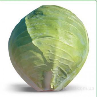 Семена белокочанной капусты Hitomi F1 / Хитоми F1 (Китано)