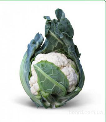 Семена цветной капусты Misora F1 / Мисора F1 фирмы Китано