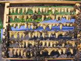 """Продам бджоломатки """"Карпатка"""" 2015 року"""