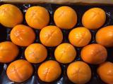 Свежие фрукты и овощи из Испании. Прямые поставки