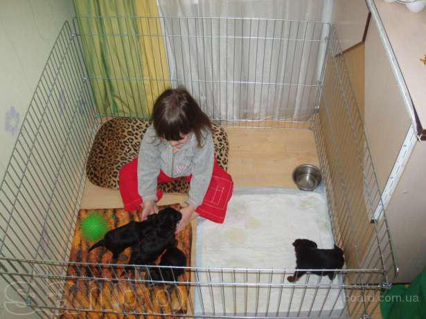 Вольер - клетка для щенков, кошек, мини собак или котят на прокат 200/месяц (продажа новых)