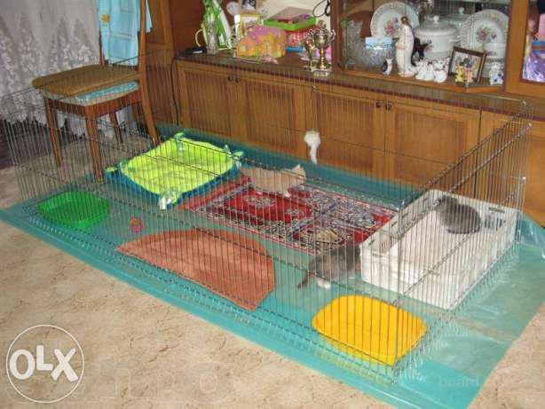 Предлагаю манеж для содержания/разведения котят или щенков 200х100хh60 см