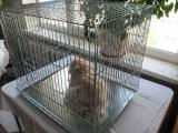 Клетка для собак или кошек 63х50хh53 см