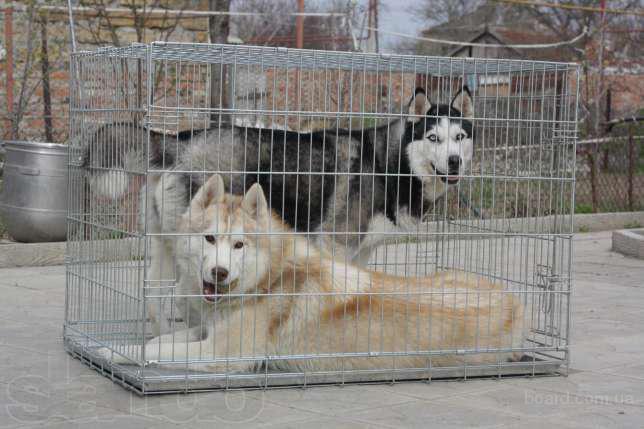 Большая клетка для собак гигантских пород 108х72х82 см (2 двери)