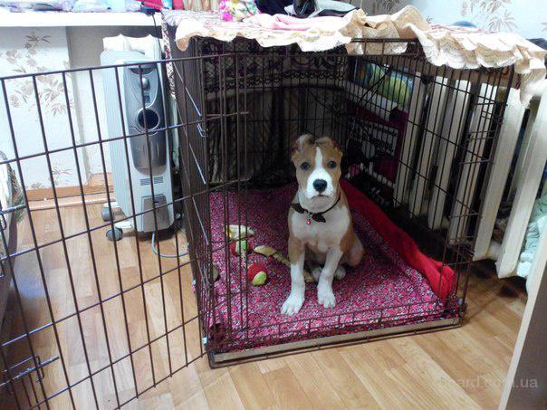 Клетки для собак 92х63хh72 см (две двери)