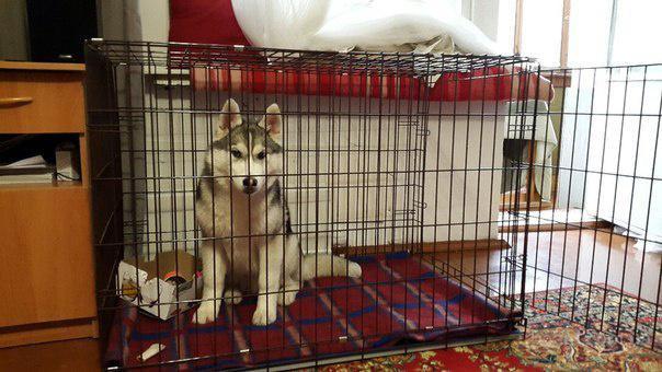 Клетка для собак 2 двери (92х63х72 см)