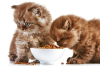 Сбалансированный сухой корм для котов и кошек