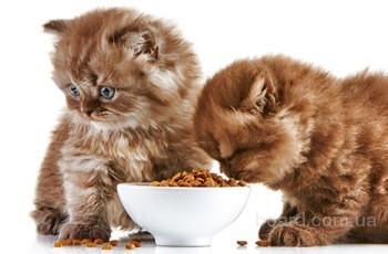 Сухой корм для кошек - залог здоровья вашего питомца