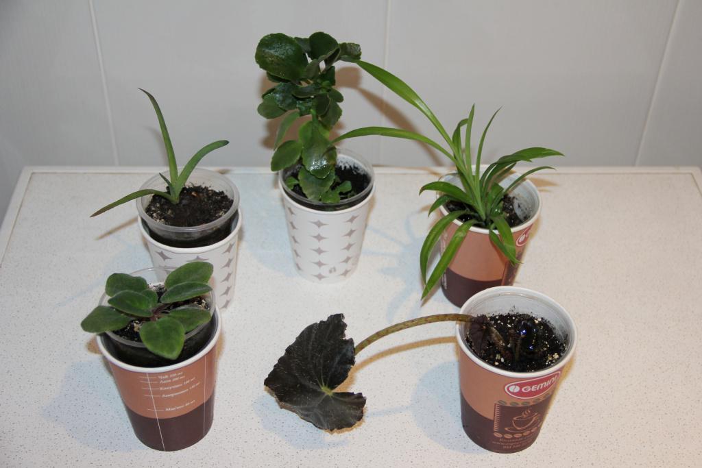 Набор из 5 молодых комнатных растений №2.