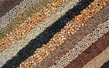 Куплю кукурузу, соя, рапс, подсолнечник, пшеницу,ячмень